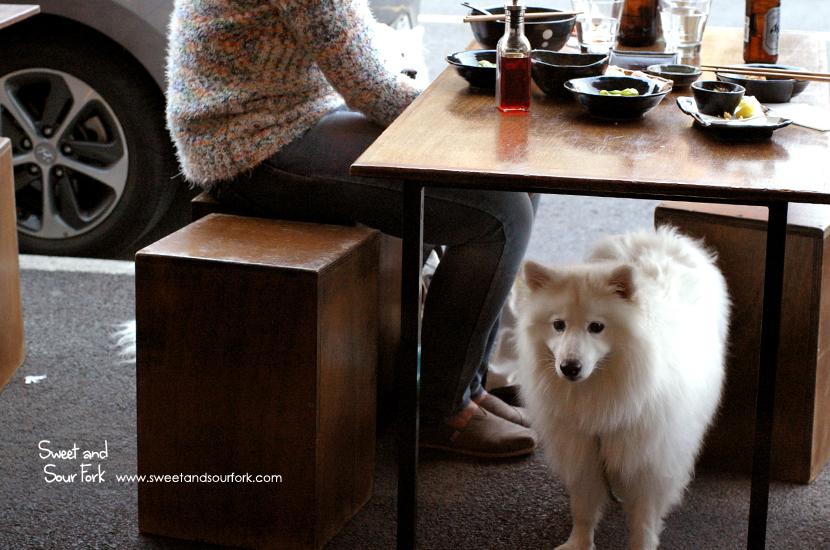 (4) Dog