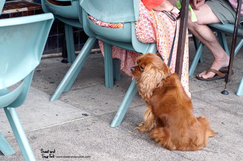 (12) Dog